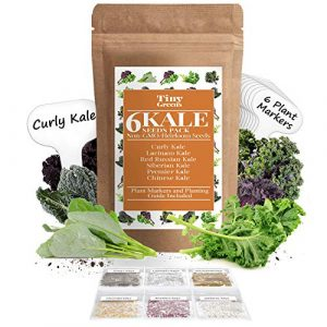 Tiny Greens Heirloom Seed 1 Grow Kale Seeds 6 Collection Pack for Planting(600 Seeds) Lacinato Kale Seeds, Curly Kale, Red Russian, Dwarf Siberian, Premier Kale, Chinese Kale | Heirloom Seeds Vegetables Non-GMO Vegetable Seeds