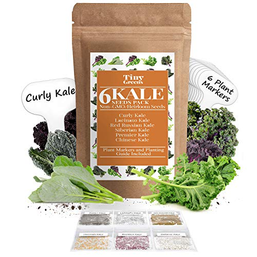 Tiny Greens  1 Grow Kale Seeds 6 Collection Pack for Planting(600 Seeds) Lacinato Kale Seeds