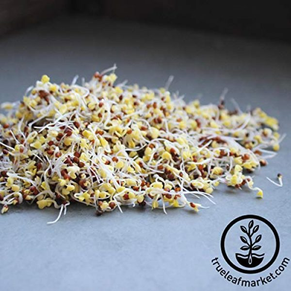 Handy Pantry Organic Seed 5 Organic Broccoli Sprouting Seeds By Handy Pantry | 1 Pound Resealable Bag| | Non-GMO Broccoli Sprouts Seeds, Contain Sulforaphane