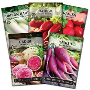 Sow Right Seeds Heirloom Seed 1 Sow Right Seeds - Radish Seed Collection for Planting - Champion, Watermelon, French Breakfast, China Rose, and Minowase (Diakon) Varieties, Non-GMO Heirloom Seed to Plant Home Vegetable Garden