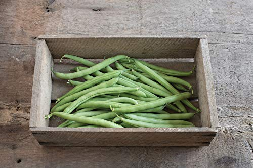 David's Garden Seeds  1 David's Garden Seeds Bean Bush Provider SL8723 (Green) 100 Non-GMO