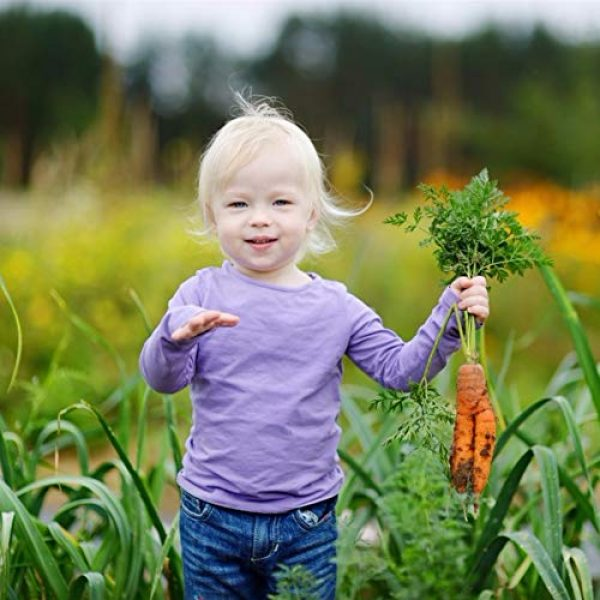 Mistyrain Organic Seed 3 Carrot Seeds Vegetable Seeds Organic Garden Planting Seeds Perennial Fresh Seeds Bonsai Nutritious Seeds for Home Garden Yard Roof Planting Outside Door Home Plant for Cooking Dish Soup Non-GMO,100pcs