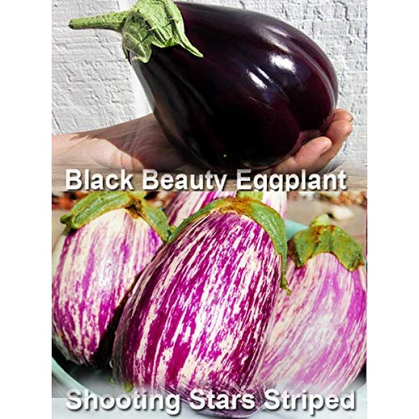 Harley Seeds Heirloom Seed 4 Please Read! This is A Mix!!! 30+ Eggplant Mix Seeds 11 Varieties Heirloom Non-GMO Aubergine, Asian, European, Italian, Profilic, Super Delicious, from USA