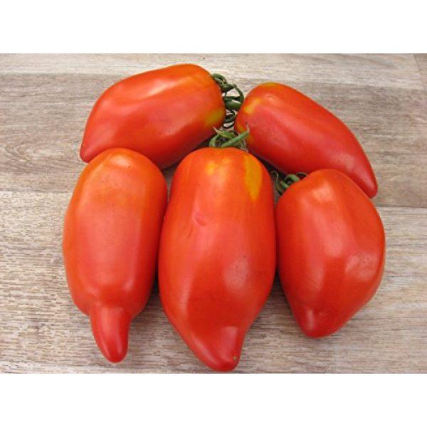 Fertile Ukraine Seeds Heirloom Seed 3 Seeds Tomato Like Pepper Red Long Vegetable Heirloom Ukraine