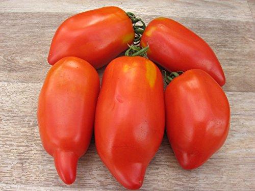 Fertile Ukraine Seeds  3 Seeds Tomato Like Pepper Red Long Vegetable Heirloom Ukraine