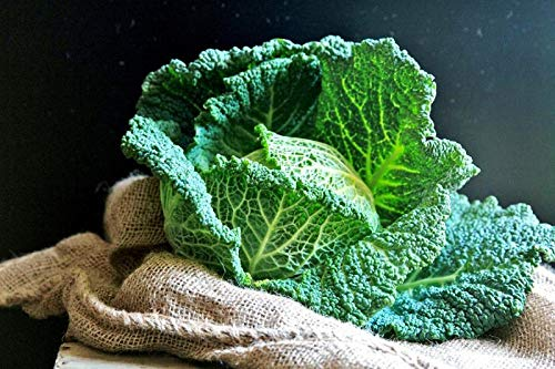 SeedsUA  6 Seeds Savoy Cabbage Vertus Beautiful Vegetable Heirloom Ukraine for Planting