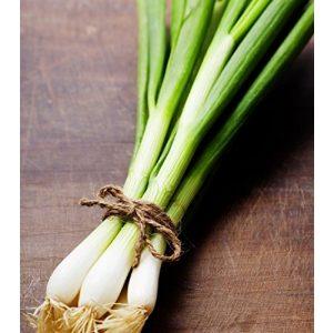 Hill Creek Seeds  1 Hill Creek Seeds Evergreen Bunching Onions Seeds - Hardy Heirloom Scallions - Non-GMO 1