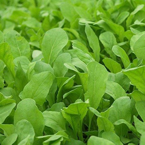 Dirt Goddess Super Seeds  1 Bulk Organic Arugula Seeds (1/2 lb) 82