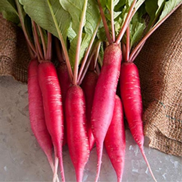 Mountain Valley Seed Company Heirloom Seed 6 Radish Sprouting Seed - Red Arrow Variety - 1 Lb Seed Pouch - Heirloom Radish Sprouts - Non-GMO Sprouting and Microgreens