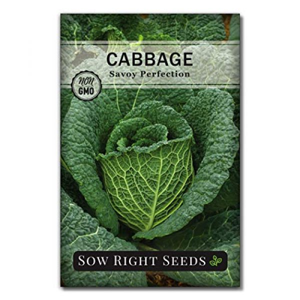 Sow Right Seeds Heirloom Seed 5 Sow Right Seeds - Cabbage Seed Collection for Planting - Savoy Perfection, Red Acre, Golden Acre, and Michihili (Nampa) Cabbages, Instruction to Plant and Grow a Non-GMO Heirloom Home Vegetable Garden