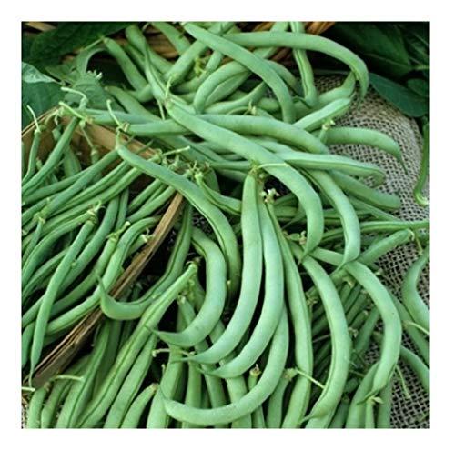 David's Garden Seeds  1 David's Garden Seeds Bean Bush Tendergreen SL8I71 (Green) 100 Non-GMO