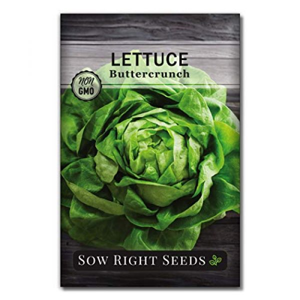 Sow Right Seeds Heirloom Seed 1 Sow Right Seeds - Buttercrunch Lettuce Seed for Planting - Non-GMO Heirloom Packet with Instructions to Plant a Home Vegetable Garden, Indoors or Outdoor; Great Gardening Gift (1)