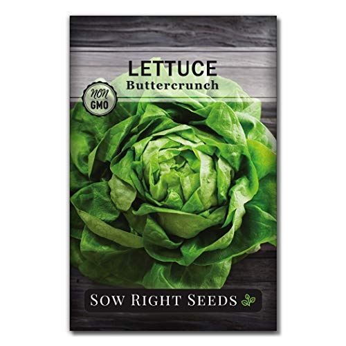 Sow Right Seeds  1 Sow Right Seeds - Buttercrunch Lettuce Seed for Planting - Non-GMO Heirloom Packet with Instructions to Plant a Home Vegetable Garden