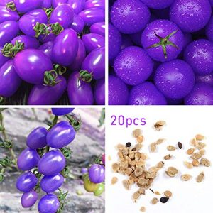 Mistyrain Organic Seed 1 Tomato Seeds Vegetables Seeds Purple Tomato Seeds Bonsai Vegetables Delicious Tasty Organic Seeds Tomato Plants Seeds for Planting Home Garden Yard Fruits Vegetables Bonsai Balcony Farm Indoor Outdoor