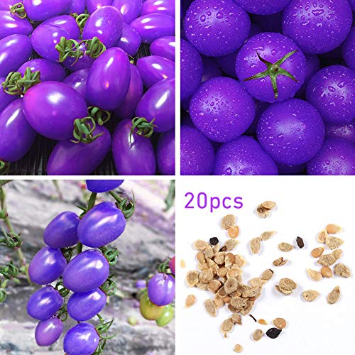 Mistyrain  1 Tomato Seeds Vegetables Seeds Purple Tomato Seeds Bonsai Vegetables Delicious Tasty Organic Seeds Tomato Plants Seeds for Planting Home Garden Yard Fruits Vegetables Bonsai Balcony Farm Indoor Outdoor