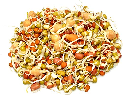 Radish Sprout Seeds