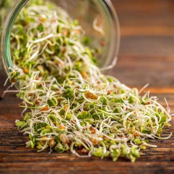Country Creek Seeds Organic Seed 2 Green Pea Sprouting Seed, Organic, Non GMO - 6 oz - Country Creek Brand - Green Peas for Sprouts, Garden Planting, Cooking, Soup, Emergency Food Storage, Vegetable Gardening, Juicing, Cover Crop