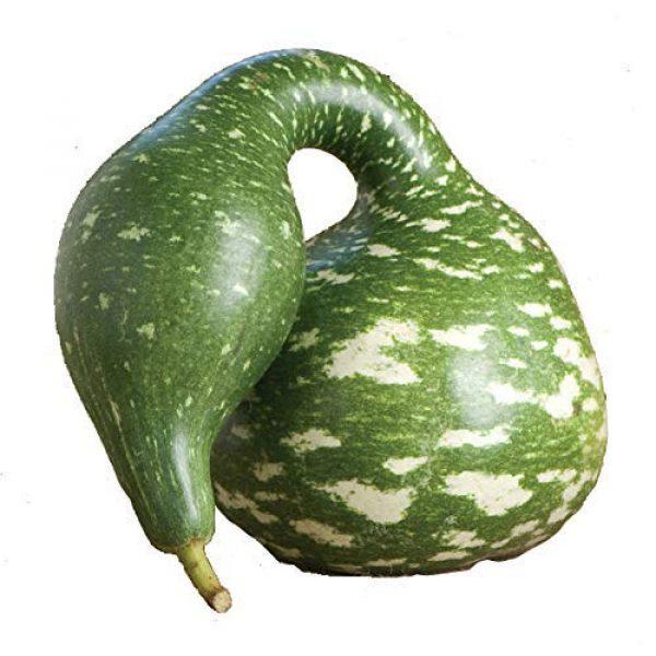 Isla's Garden Seeds Heirloom Seed 1 Gourd Speckled Swan Squash Seeds, 15+ Premium Heirloom Seeds, (Isla's Garden Seeds), Non Gmo, 90% Germination, Highest Quality Seed