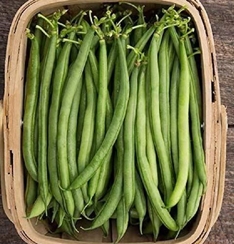 David's Garden Seeds  1 David's Garden Seeds Bean Pole Seychelles 4343 (Green) 100 Non-GMO