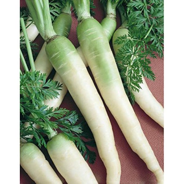 Isla's Garden Seeds Organic Seed 1 Snow White Carrot Seeds, 350+ Premium Heirloom Seeds, Gardeners Choice!, (Isla's Garden Seeds), Non GMO Organic, 85% Germination Rates Under Correct Conditions, Highest Quality Seeds, 100% Pure