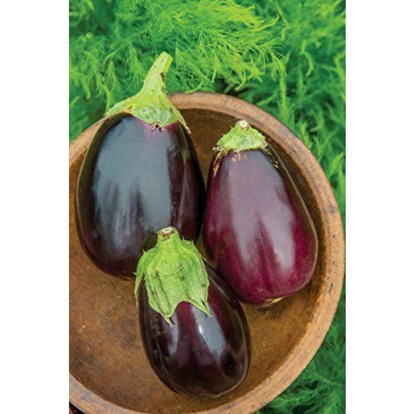 Burpee Organic Seed 2 Burpee Black Beauty (Organic) (Heirloom) Eggplant Seeds 50 seeds