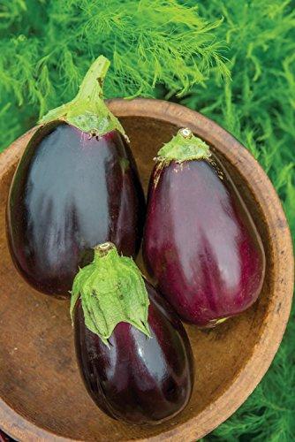 Burpee  2 Burpee Black Beauty (Organic) (Heirloom) Eggplant Seeds 50 seeds