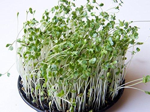 Dirt Goddess Super Seeds  1 Bulk Organic Green Sprouting Calabrese Broccoli (1 Lb)