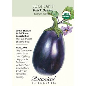 Botanical Interests Organic Seed 1 Eggplant Black Beauty Certified Organic Heirloom Seeds 75 Seeds