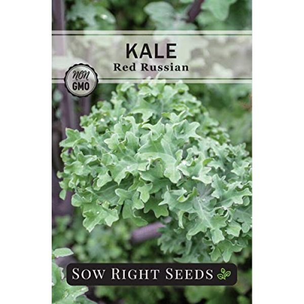 Sow Right Seeds Heirloom Seed 4 Sow Right Seeds - Kale Seed Collection for Planting - Non-GMO Heirloom Packet with Instructions to Plant and Grow a Home Vegetable Garden, Great Gardening Gift