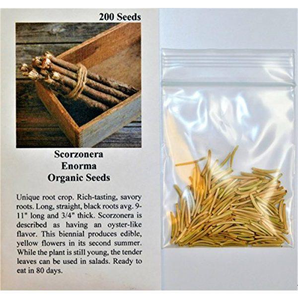 David's Garden Seeds Organic Seed 2 David's Garden Seeds Scorzonera Enorma 3659 (Green) 200 Non-GMO, Organic Seeds