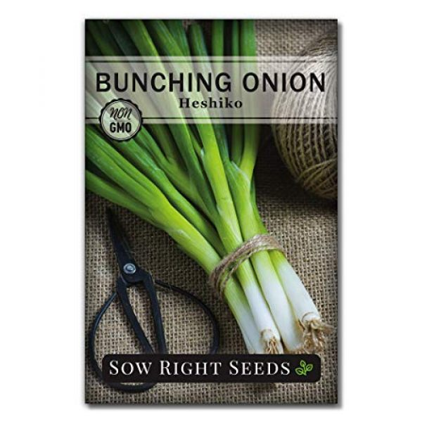 Sow Right Seeds Heirloom Seed 1 Sow Right Seeds - Heshiko Bunching Japanese Green Onion Seeds for Planting - Non-GMO Heirloom Seeds with Instructions to Plant and Grow a Kitchen Garden, Indoor or Outdoor; Great Gardening Gift