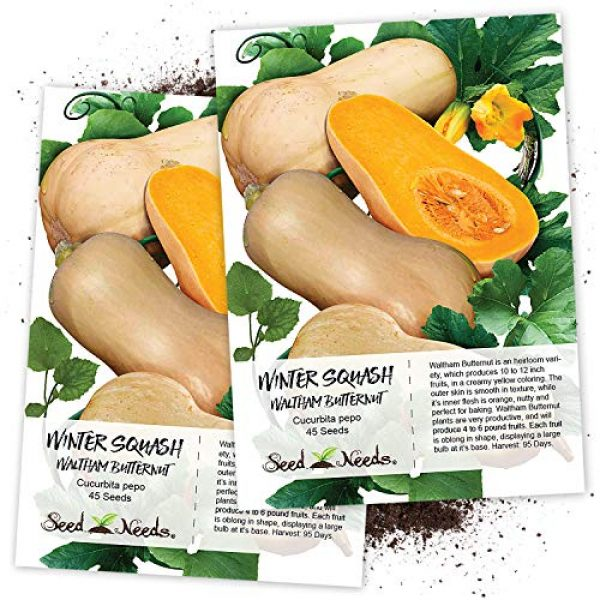 Seed Needs Heirloom Seed 1 Seed Needs, Waltham Butternut Winter Squash (Cucurbita Pepo) Twin Pack of 45 Seeds Each Non-GMO