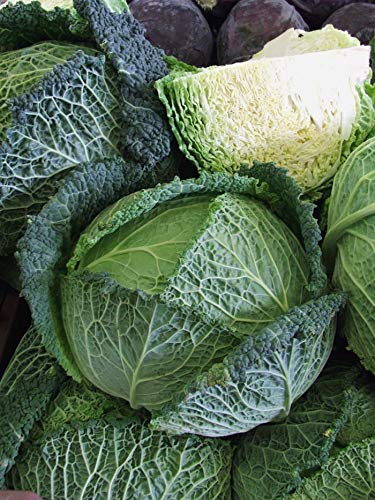SeedsUA  7 Seeds Savoy Cabbage Vertus Beautiful Vegetable Heirloom Ukraine for Planting