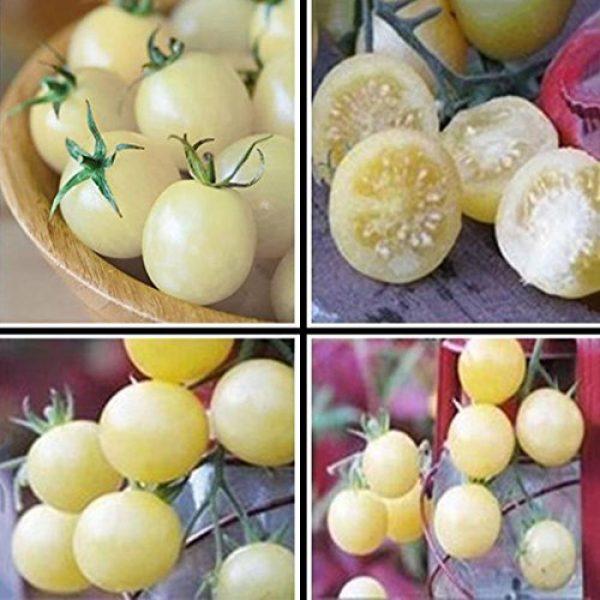SeedsUA Heirloom Seed 4 Seeds Cherry Tomato Snow White Vegetable Heirloom Ukraine