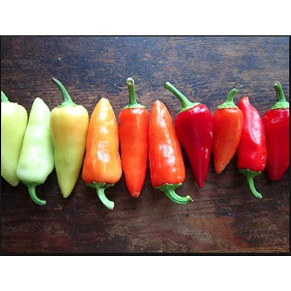 Isla's Garden Seeds Organic Seed 4 Santa Fe Grande Hot Pepper Seeds, 50+ Premium Heirloom Seeds, Chili Peppers, (Isla's Garden Seeds) Non Gmo Organic Seeds, 90% Germination, Highest Quality!