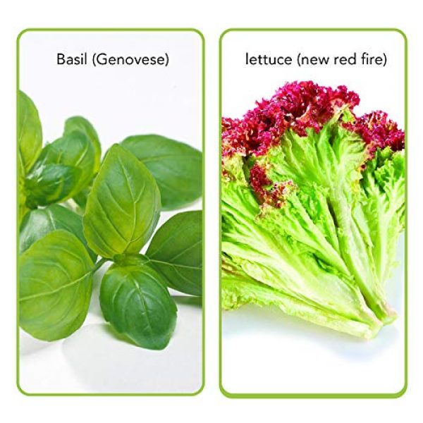 WOHOUS Organic Seed 3 WOHOUS Lettuce Seeds 3500 Heirloom Seeds Vegetable Seeds, 8 Varieties Organic Seeds Heirloom Lettuce Seed, 100% Non-GMO Seeds for Planting