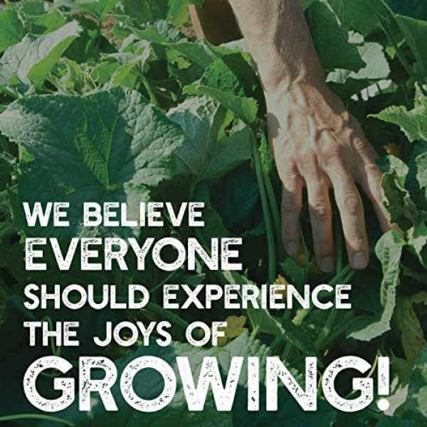 Mountain Valley Seed Company Organic Seed 5 7 Varieties Non-GMO Organic Heirloom Tomato Seeds - Chadwick Cherry Tomato Seeds, Green Zebra, Black Krim Tomato Seeds, Golden Queen, Cherokee Purple Seeds, Brandywine Pink Tomato Seeds, Pineapple