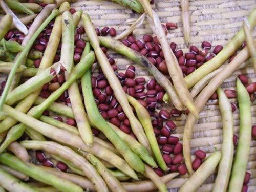 Isla's Garden Seeds  1 Rainbow Bean Mix Sprouting Seeds (Contains: Adzuki