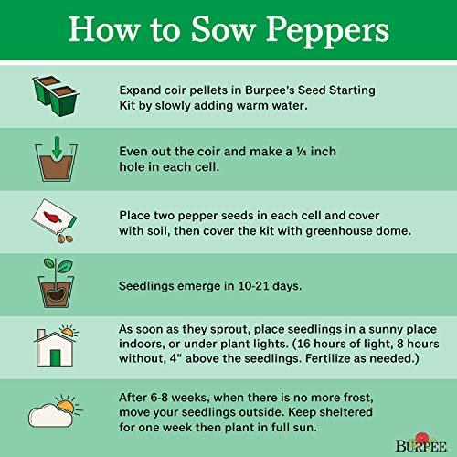Burpee  4 Burpee Marconi Rosso (Organic) Sweet Pepper Seeds 20 seeds
