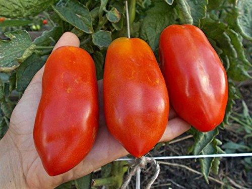 Fertile Ukraine Seeds  2 Seeds Tomato Like Pepper Red Long Vegetable Heirloom Ukraine