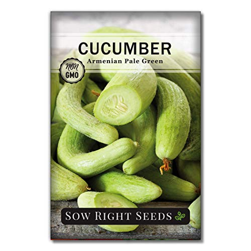 Sow Right Seeds  1 Sow Right Seeds - Armenian Pale Green Cucumber Seeds for Planting - Non-GMO Heirloom Seeds with Instructions to Plant and Grow a Home Vegetable Garden