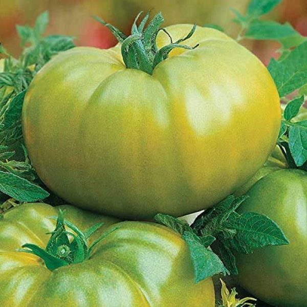 Park Seed Heirloom Seed 2 Park Seed Heirloom Green Hybrid Tomato Seeds, 25 Seeds in a Pack