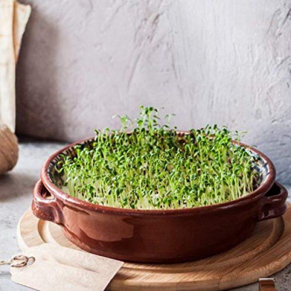 ECOVOO Organic Seed 5 Organic Microgreen Seeds Salad Mix - Non GMO Microgreen Seeds, Sunflower, Mustard, Radish, Red Amaranth, Broccoli - Seeds for Microgreens - Microgreen Organic Seeds - Microgreen Seeds for Sprouting