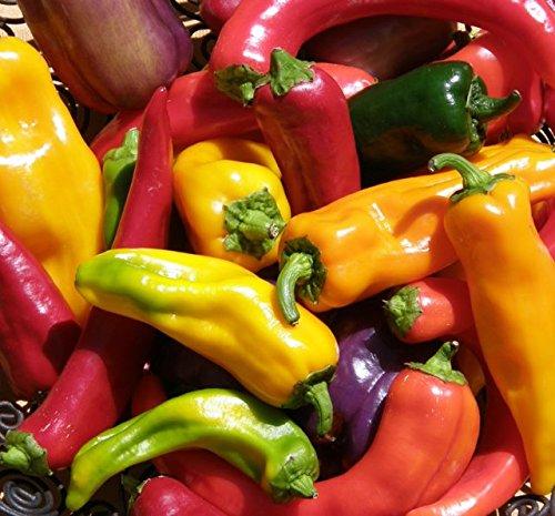 Ohio Heirloom Seeds  1 Hot Pepper Seed Assortment- 6 Varieties
