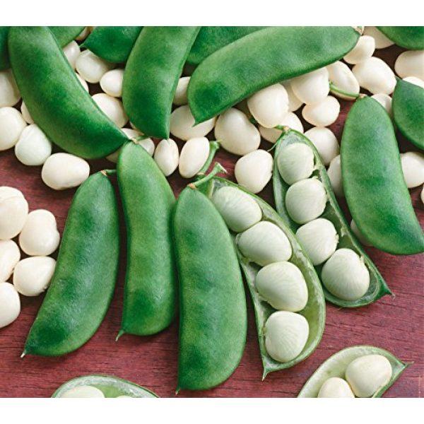 Isla's Garden Seeds Heirloom Seed 1 Henderson Lima Beans,100+ Premium Heirloom Seeds, Fantastic & Must Have for Home Garden!, (Isla's Garden Seeds), Non GMO, Highest Quality Seeds, 90% Germination Rates, 100% Pure