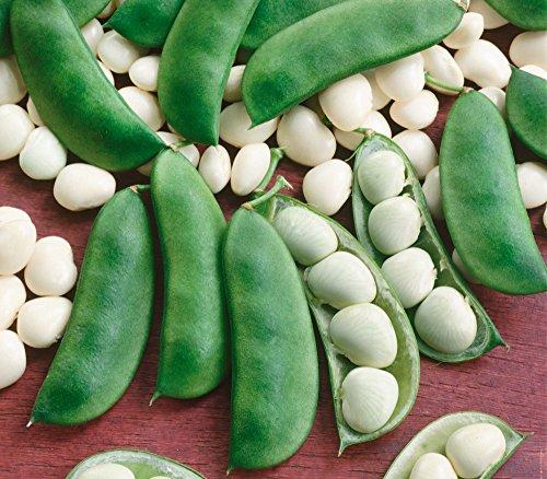 Isla's Garden Seeds  1 Henderson Lima Beans
