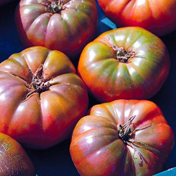 Seedz Organic Seed 2 Organic Tomato Seeds, APPR. 100, Cherokee Purple Beefsteak Tomato, Heirloom Vegetable Seeds, Certified Organic, Non GMO, Non Hybrid, USA