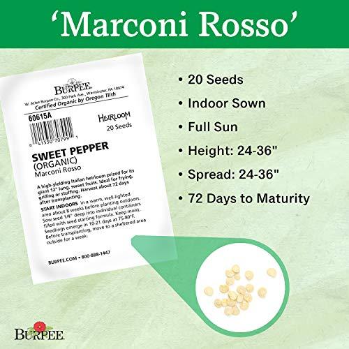 Burpee  3 Burpee Marconi Rosso (Organic) Sweet Pepper Seeds 20 seeds