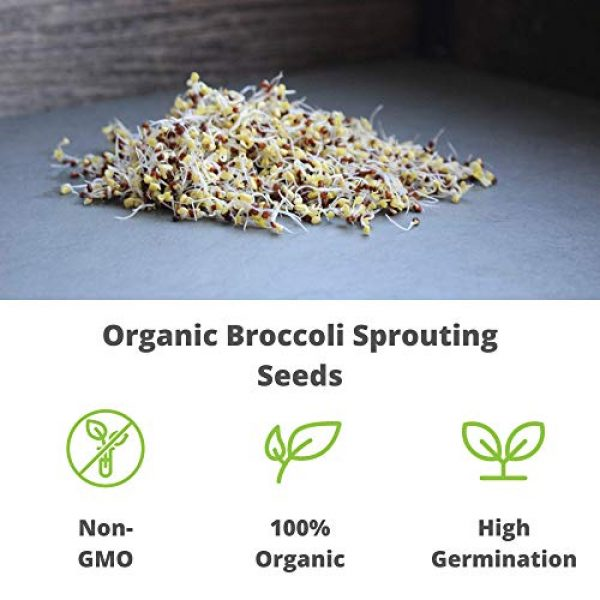 Handy Pantry Organic Seed 7 Organic Broccoli Sprouting Seeds By Handy Pantry | 1 Pound Resealable Bag| | Non-GMO Broccoli Sprouts Seeds, Contain Sulforaphane