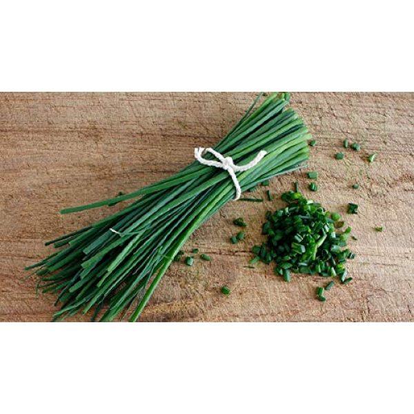 Fertile Ukraine Seeds Heirloom Seed 5 Seeds Chives Onion Green Vegetable Heirloom Ukraine